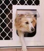 Pet Door Medium